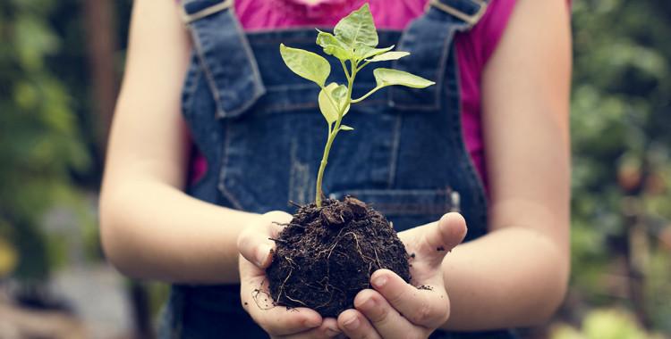 Folly a ekologie - Jak pomáháme my?